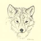 wolf-smaller